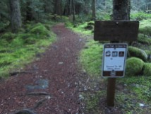 The start of Paradise Park trail. On the trail before the sunrise.