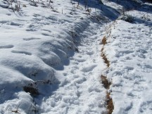 Track on the loop trail showed folks had made the trek from Timberline Lodge.