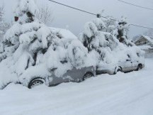 Snow covered limbs end up burring cars. This is way do not want to plant shore pines in Portland.