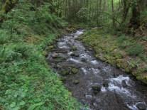 The trail starts next to Gorton Creek.