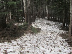 I made it up to the plateau at 4200 ft. Still enough snow here to hide the trail. My turn around point.