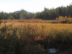 Upper end of the Meadow with Lone Butte in the background.