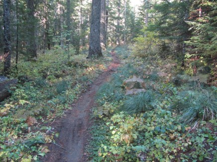 I found this trail was now mostly used by mountain bikes.