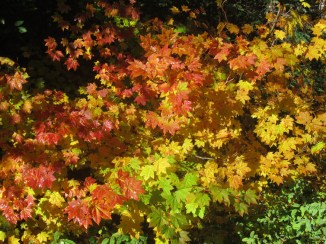 There were some patches of fall color here and there.