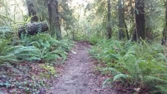 Down Linnton trail through the switch backs.