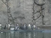 Zoo_IMG_4896