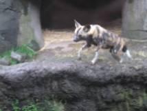 Zoo_IMG_4916