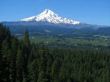 Mt. Hood with orchard below it.