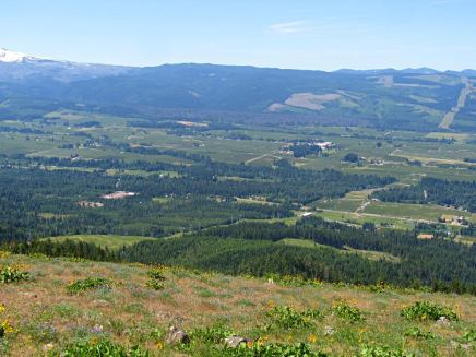 View of Hood River Valley from the top of Bald Mt.