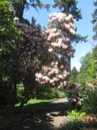 Cystal_Rhododendrons_IMG_5655