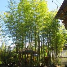 BambooCraftsmanCo_IMG_8493