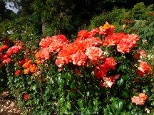 RoseGarden_DSCF2632