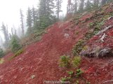 The trail switched to the East side on the way down. We were surprise to find on red cinder in this side of the mt.