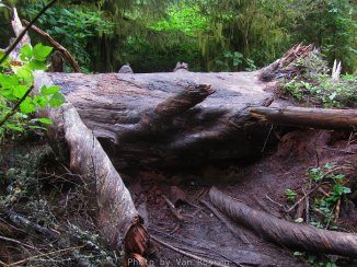 This log was so large and slippery it was difficult to cross.