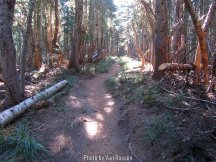 TimberlineTrail_IMG_9479
