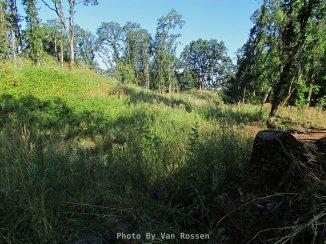 RidgefieldIMG_0053