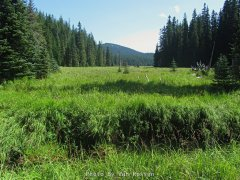 Cayuse Meadow