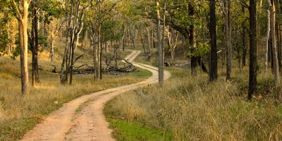 Jungle Trails in Pench