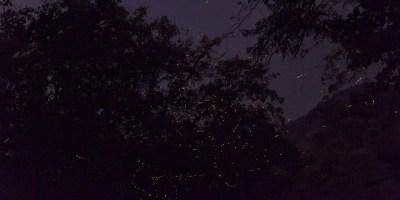 Fireflies make kaleidoscopic patterns along the trekking route to Rajmachi
