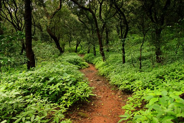 The lovely forest of Matheran