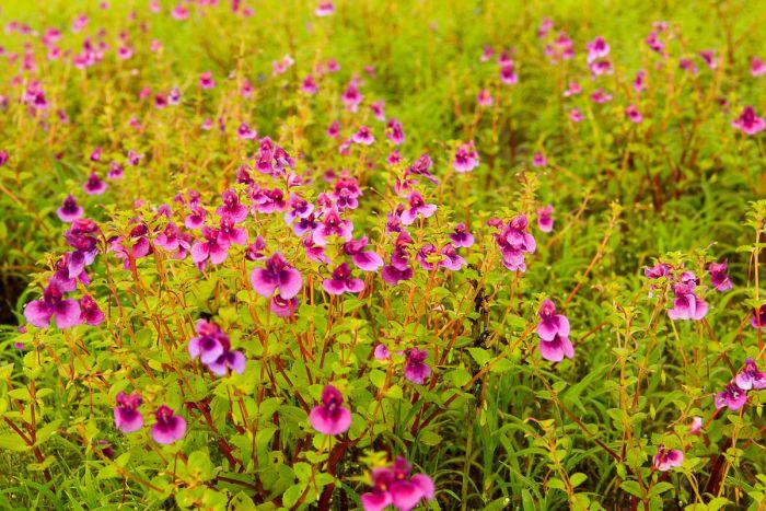 Wildflowers at Kaas