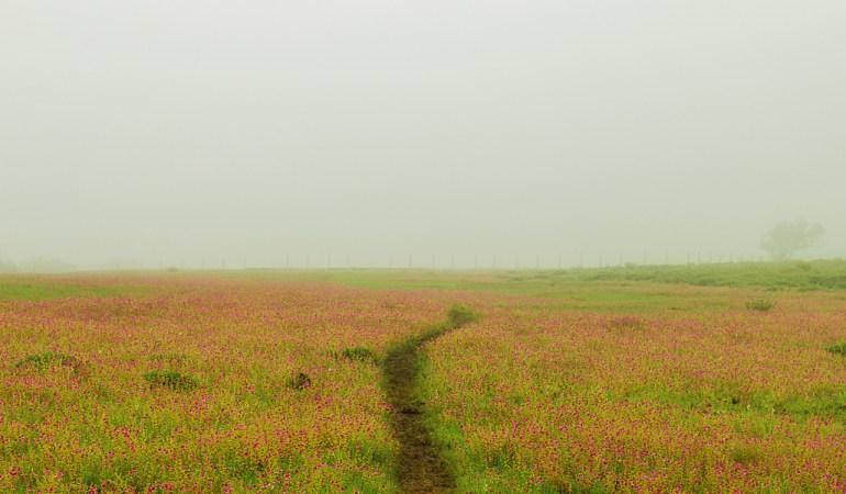 A walk among the flowers
