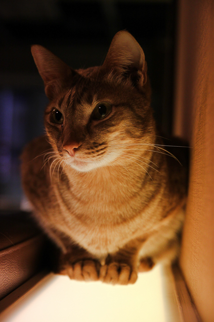 A cat sits on some lighting at the cafe