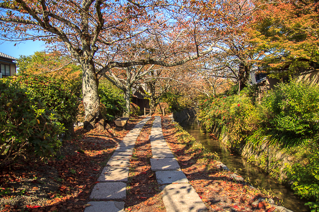 Autumn leaves lend the look of a red carpet to the philosopher's walk