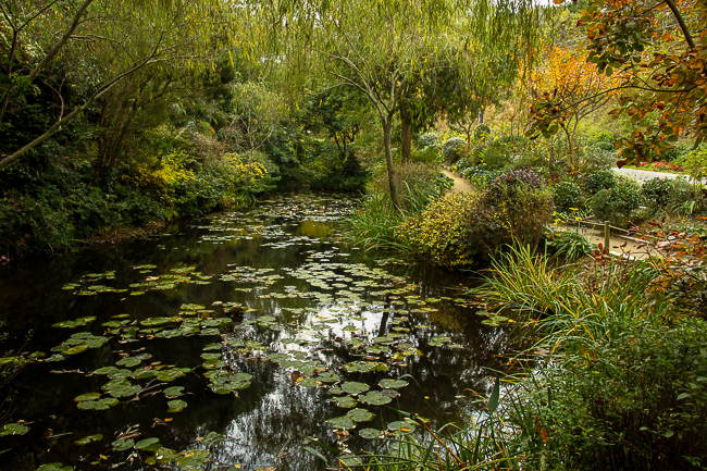 The Chichu Garden features the kind of trees and plants either appeared in Monet's works or were collected by the artist during his lifetime