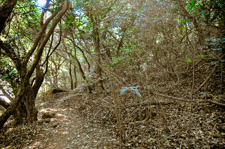The forest was a delight to walk in, my troubles and worries forgotten (Picture courtesy: Ravi Vaidyanathan)