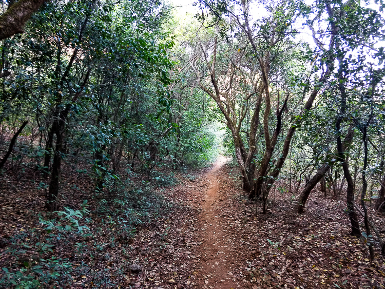 The forest trail that we took quickly moved into deep forest with tall trees overhead