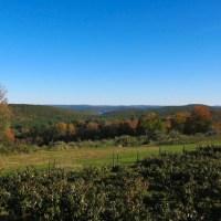 View of the Quabbin