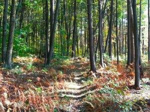Hike in Brooks Woodland Sanctuary