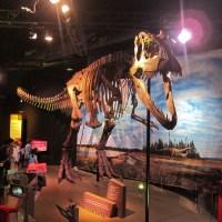 Dinosaur Display