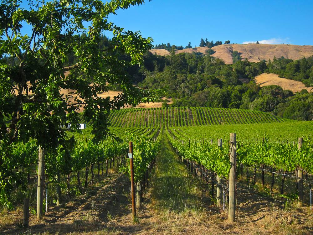 California Wine Country