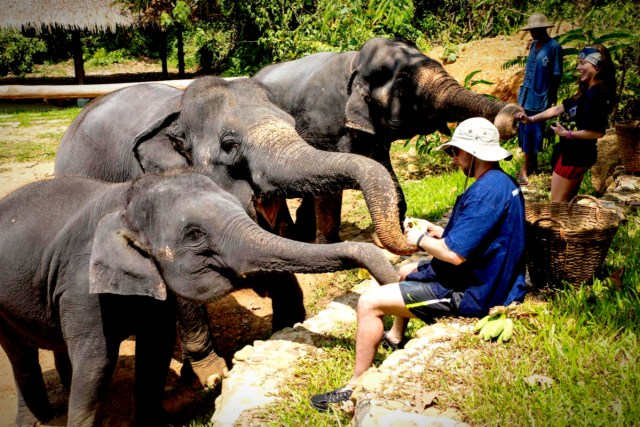 Volunteer with Elephants in Southeast Asia - By Phang Nga Elephant Park.jpg