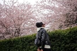 cherry-blossoms-tamara-bradshaw-toronto-1-4