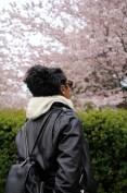 cherry-blossoms-tamara-bradshaw-toronto-1-6