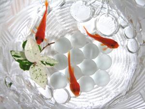 金魚の水替え