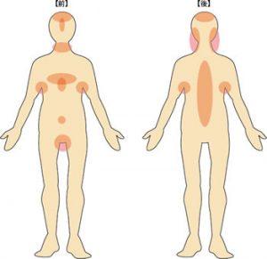 皮脂腺の部位