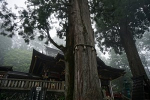 三峯神社ご神木