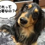 犬にケージは必要?