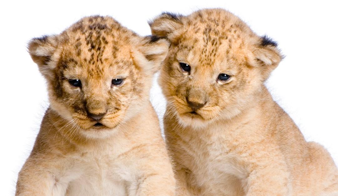 Influencers: el nuevo león de Cannes Lions