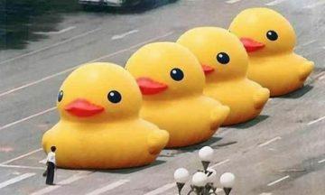 Grote gele Pekingeend