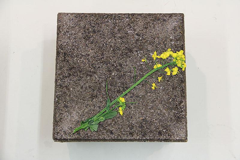 Herbarium #1_2