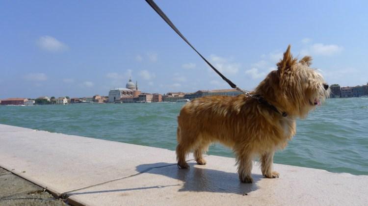 Over hondenkennissen en kantoorhonden: honden snapshots