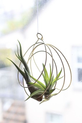 Beautiful Plant Decors For Your House 06