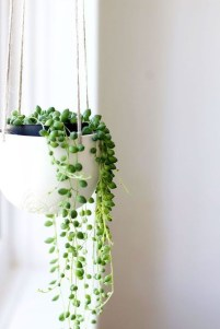 Beautiful Plant Decors For Your House 07