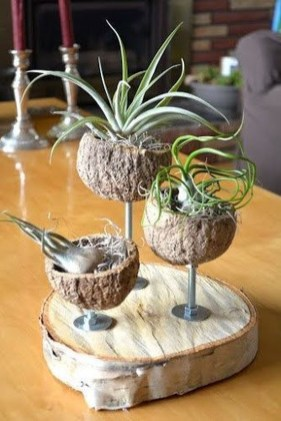 Beautiful Plant Decors For Your House 08