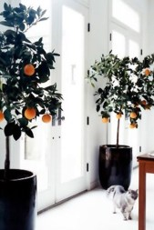 Beautiful Plant Decors For Your House 11